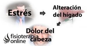 estresdolor-de-cabeza-alteracion-del-higado